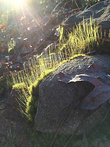 Moss, Sunbeam, Rock, listy, Príroda, Slnečné svetlo, Zelená