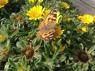 пеперуда, цветя, насекоми, природата, жълто, цвете, пеперуда - насекоми