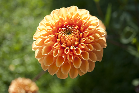 lilled, kroonleht, loodus, Aed, kevadel, Makro, taimed