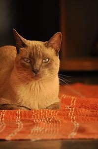cat, home, soft, kitten, domestic, warm, cute