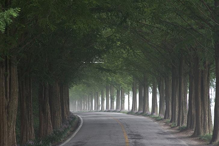 Gil, fusta, arbres de sequoia meta, resum, arbres verds, arbre escumosos, Metasequoia