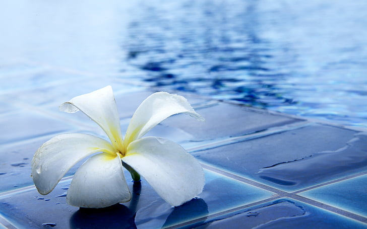 квіти, чудовий, освіжаючий, води, біля басейну, червоного жасмину, Природа
