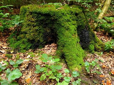 tronc d'arbre, arbre, bosc, registre, fusta, natura, se