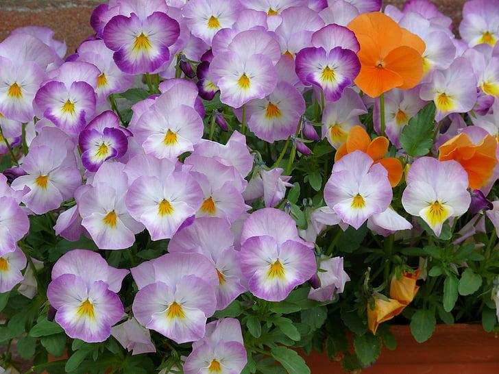 Cveće - Page 21 Violets-flowers-lilac-spring-preview