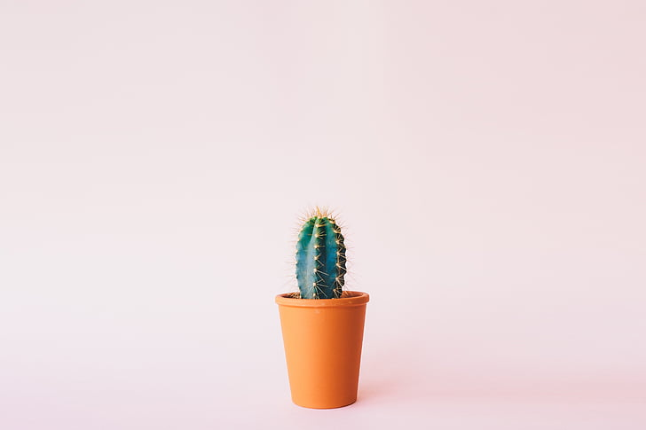 растителна, кактус, фон, Студио изстрел, оранжев цвят, копие пространство, цветен фон