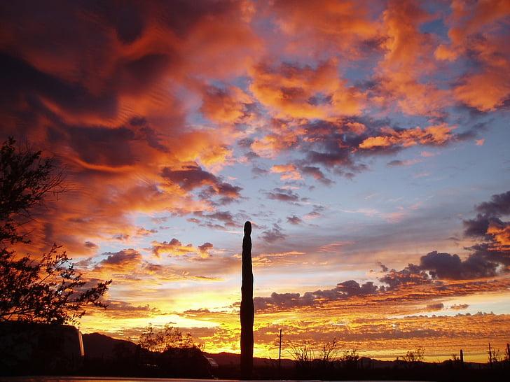 organų sistemų vamzdžių kaktusas, Saulėlydis, siluetas, kraštovaizdžio, Saulėlydis, debesys, spalvinga