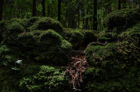 มอส, ป่า, สีเขียว, bemoost, ธรรมชาติ, ป่า, นางฟ้าป่า
