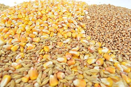 grãos, cereais, Mas, cevada, trigo