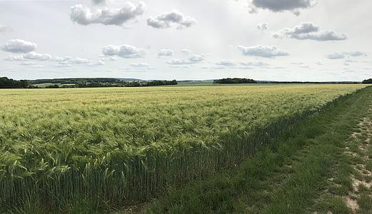 cloud, wheat, field, agriculture, rural, epi, peace