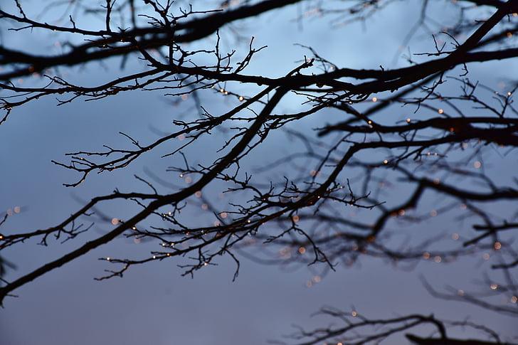 дерево, води, краплі води, вечір, краєвид, синій, Природа
