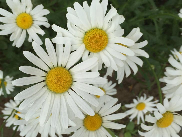 flors i plantes, el paisatge, concepció artística