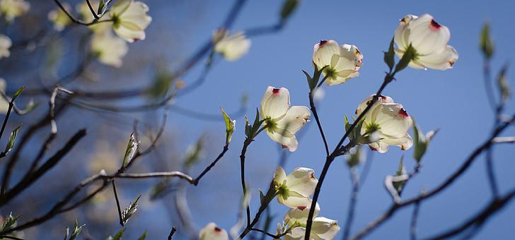 virágok, tavaszi, fa, virágos, természet, Bloom, tavaszi virágok