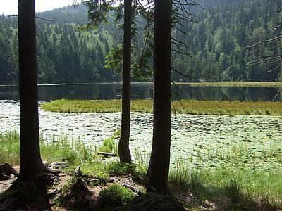 Bavarski gozd, jezero, krajine, narave, dreves, drevo, vode