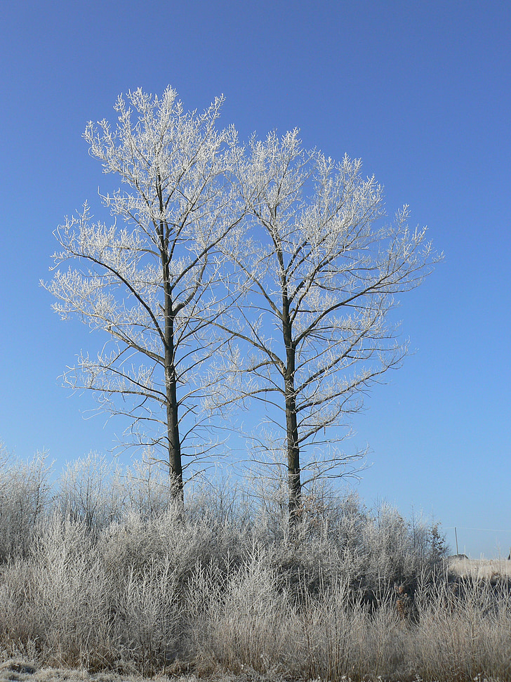 l'hivern, gelades, arbre, natura, neu, blanc