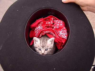 cat, kitten, zimmermann