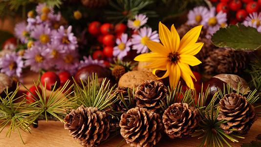 zloženie, rastliny, kvety, ovocie, ROWAN, okrasné slnečnica, Astra