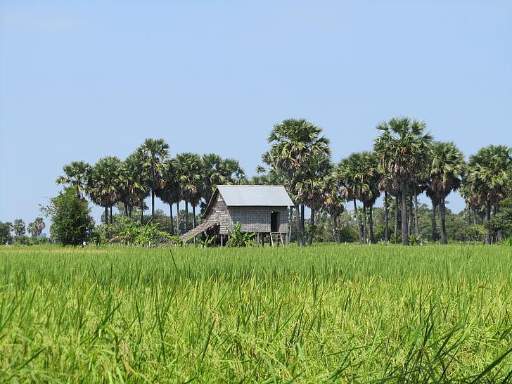 пейзаж, зелено поле, къща, дланите, Камбоджа