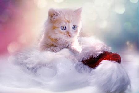 коте, сив, сърце, котка, Коледа, домашен любимец, млад котка