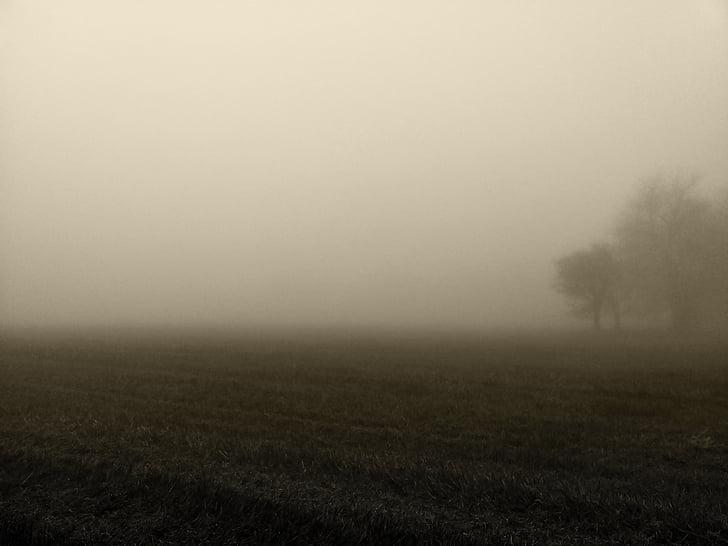 fog, morning, atmosphere, mood, sky, field, rural