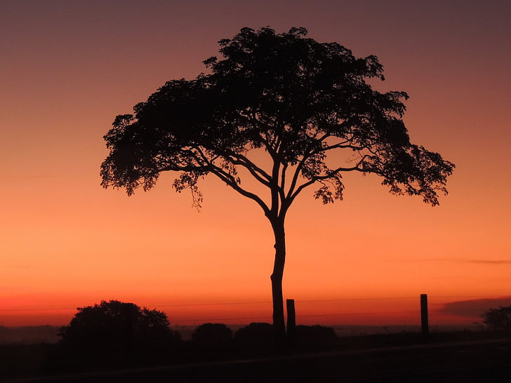 arbre, capvespre, crepuscle