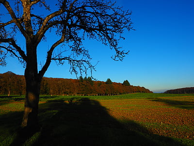 tree, fields, mood, nature