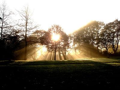sol, raig de llum, paisatge, arbre, natura, posta de sol, bosc