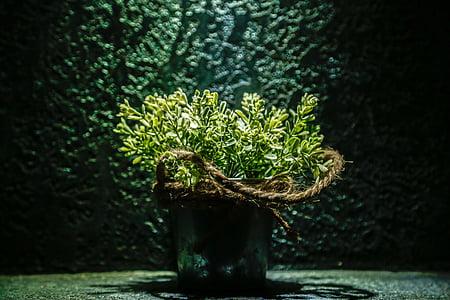 fiore in vaso, decorazione, pentola, pianta, Casa, naturale, crescita