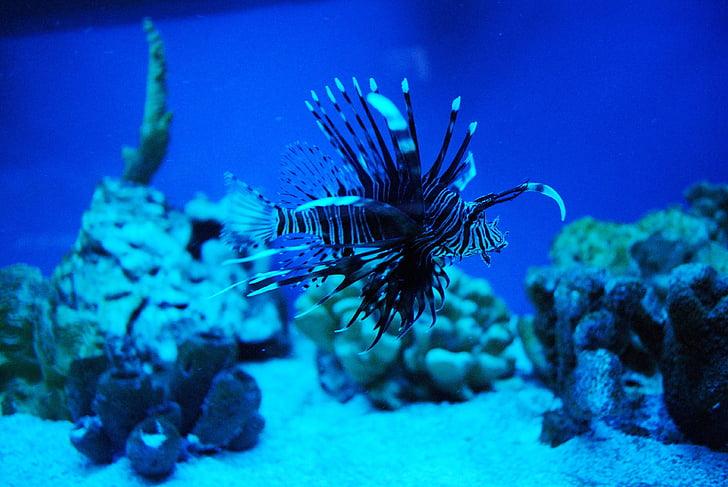 fish, animal, sea world, black and white, water