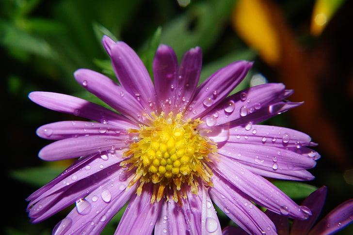 Wild flower, Blossom, Bloom, paars, plant