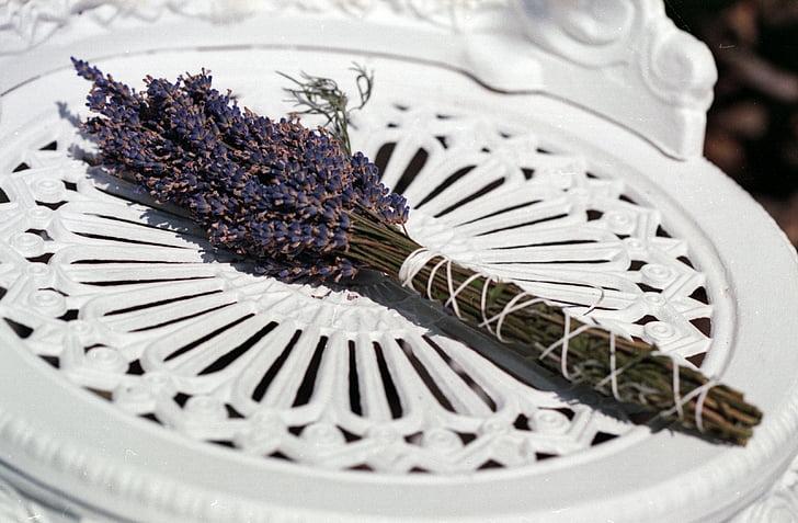 lavanda, blanc, cadira, natura, flor, flor, herba