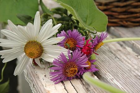 Daisy, tanaman menahun, bunga, alam, bunga, Taman, musim semi