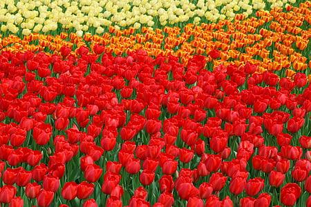 Kaunis, lill, voodi, Bloom, õied, Värv, Värviline