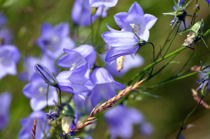 Blue Bell'de, çiçekler, Yaz