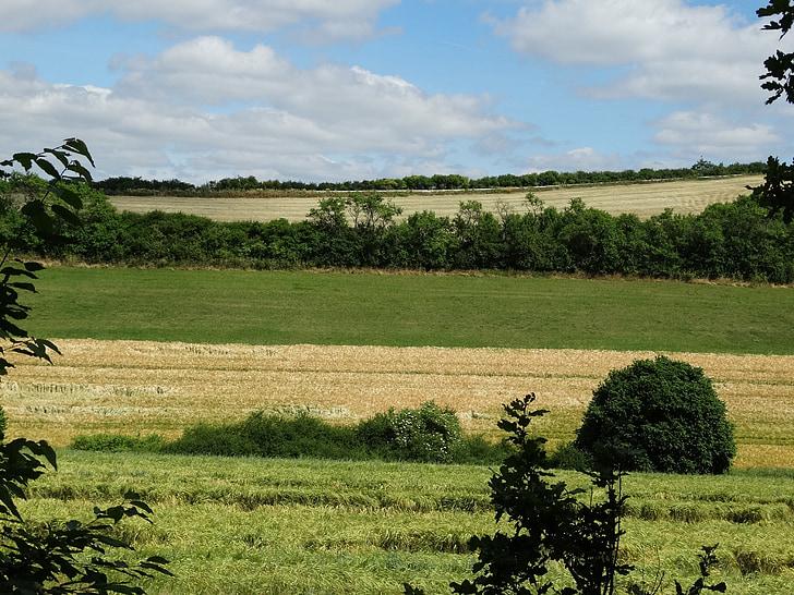 camps, paisatge, natura, tuds, l'agricultura