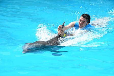 oceanische dolfijnen, dolfijnen, Marine leven, vissen in water, oceanische, vis, zoogdieren