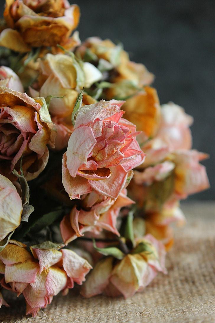 flor, flors, Rosa, RAM, sec, s'esvaeixen, pansiment
