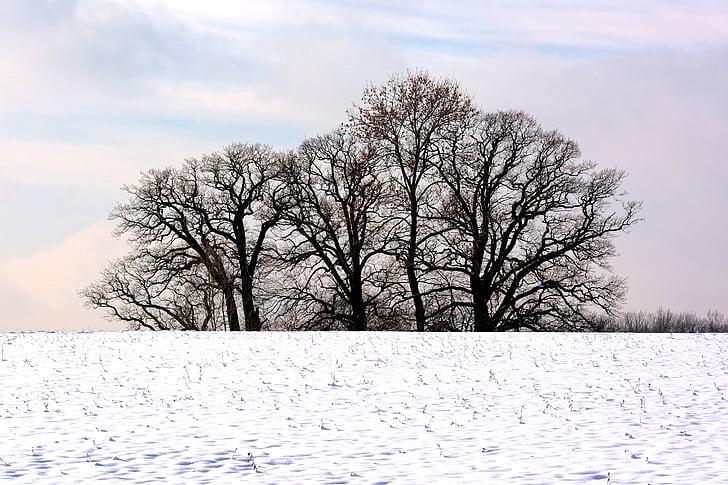 winter, trees, grove of trees, snow, nature, mood, romance