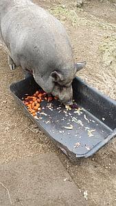 羊吃猪奶视频_免费图片: 吃, 农场, 仔猪, 猪, 猪流感   Hippopx