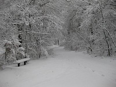 Zimní, sníh, Zimní, bílá, Les, Příroda, zimní les
