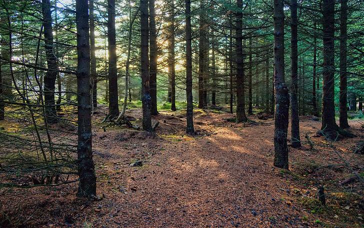 hustá, Forest, Zelená