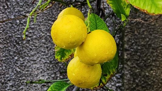 lime clés, agrumes, citron vert, fruits, frais, juteuse, en bonne santé