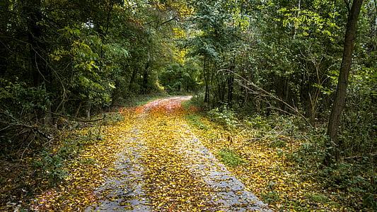 tardor, bosc, fulles, natura, arbres, camí, llum