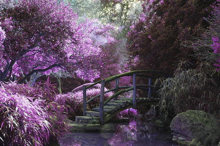 bridge, pink, blossoms, garden, park, wooden, footpath