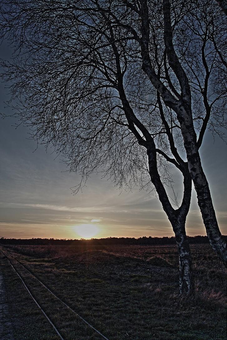 bedoll, posta de sol, un formatives, estat d'ànim, Moor