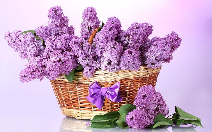 giá trong giỏ hàng, Lilac, Bow, màu tím, Hoa, Hoa oải hương, màu hoa oải hương