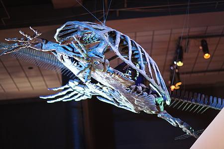 turtle, animal, marine, fish, shell, skeleton, fossil