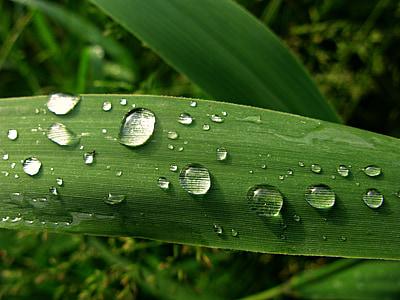 dug, vanddråbe, regndråber, blad, grøn, lyse