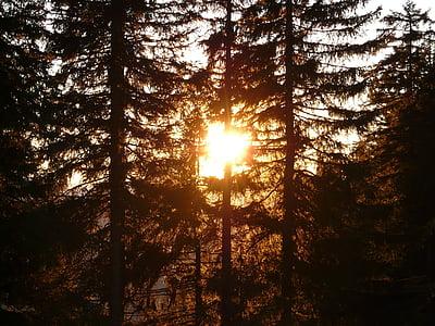 forest, tree, sun, back light, tree trunks, mood, romance