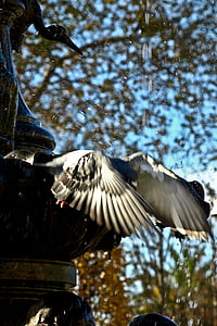 paloma, wings, birds, pigeons, birds in flight, bird, nature