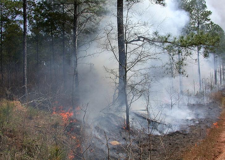 nadzor gorenja, recept, drevo, dreves, lesa, gozd, bor